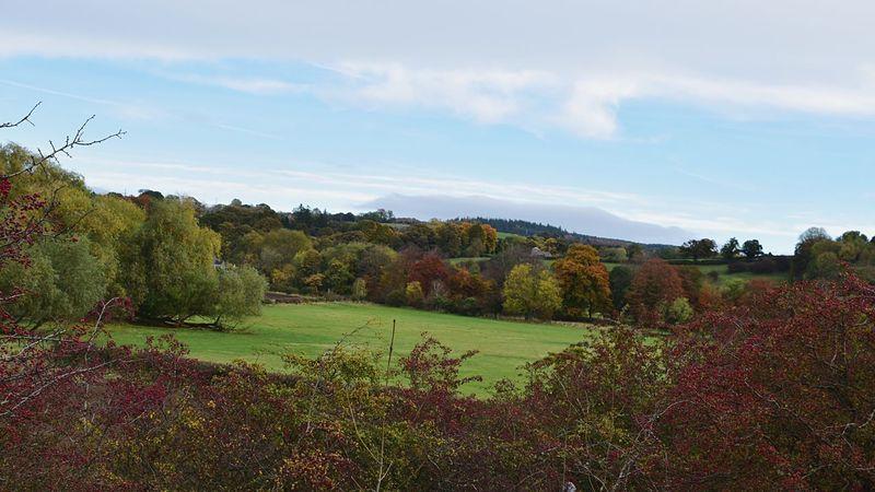 Taking Photos Landscape Autumn Colors Field Trees A69 Hexham Nikon D5500
