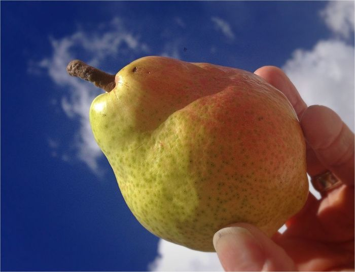 Pear in the Sky Urban Nature Taking Photos Food Wohnglück
