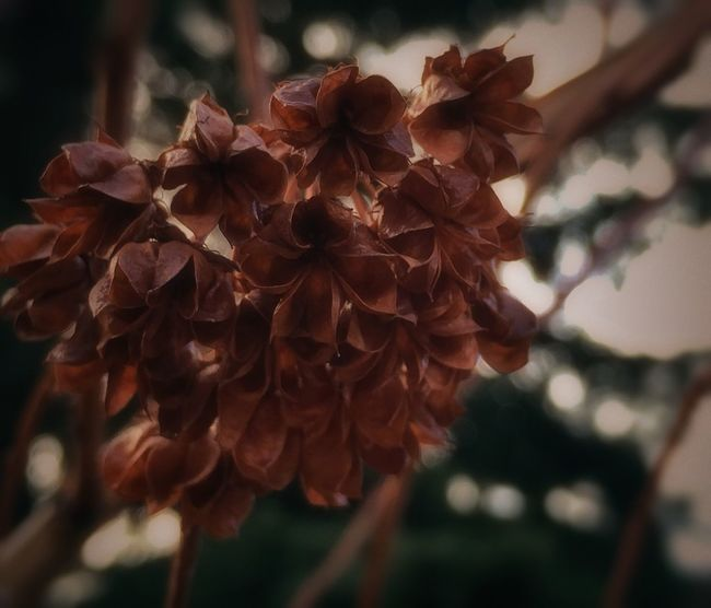 IPhone Photography Iphoneacademy Eyemphotography Iphonephotoacademy EyeEm Best Shots Dried Flower Head Lethbridge Dried Seeds Macro Beauty