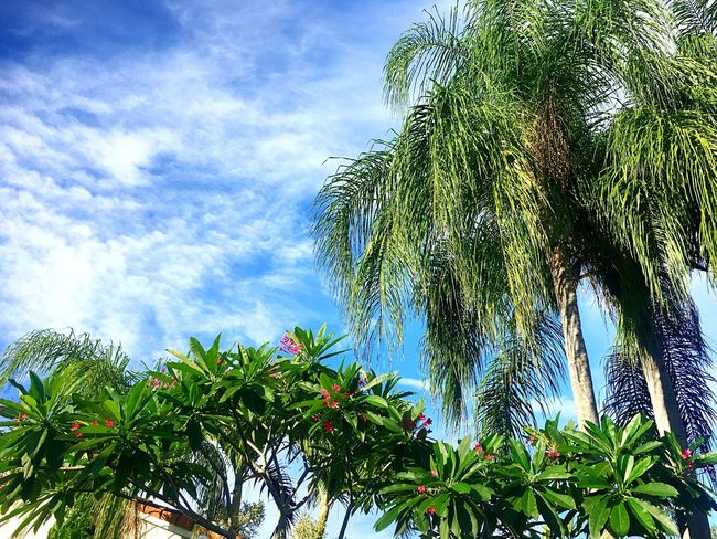Palm Trees Trees And Nature Nature