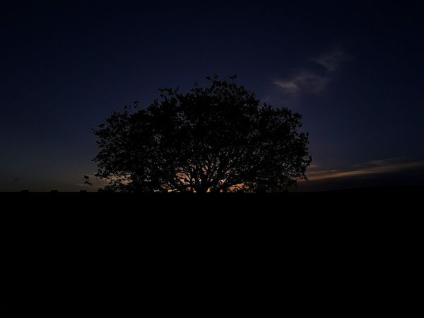 Tree Silhouette Nature Night Beauty In Nature Sky No People Landscape Tranquility Outdoors Scenics Growth Astronomy Bestsellers Premium Collection Brazil Getty Images Tree Sunset Sunshine Sunset Silhouettes Sunshine Silhouettes Nature Live For The Story Place Of Heart The Great Outdoors - 2017 EyeEm Awards EyeEmNewHere Sommergefühle EyeEm Selects Lost In The Landscape