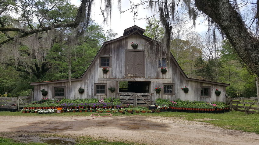 Have a lovely day #Louisiana #barn Tree Sky Architecture Building Exterior Built Structure