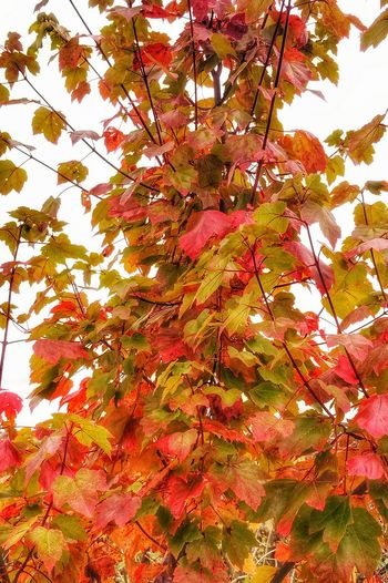 Plantlife Plantporn Plant Photography Plantography Leaves_collection Leafmania Plant Life EyeEm Nature Lover Autumn Leaves Autumn Colors Autumn🍁🍁🍁 Autumn 2015 EyeEm Best Shots - Autumn / Fall Colors Of Autumn Beautiful Autumn Autumn Collection Autumn