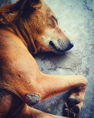 Dog Is Sleeping Animals Photographs Dog Love See & Feel Love Love Your Dog And He Will Love U Back