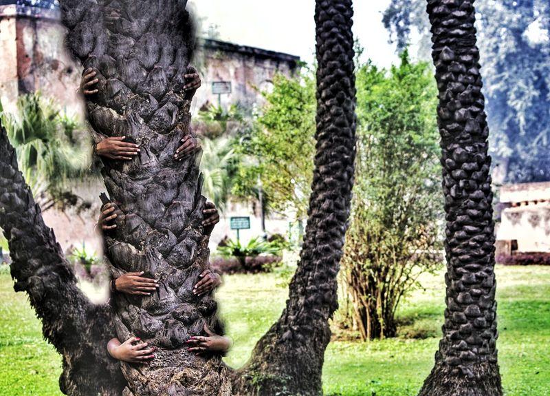 Save The Nature Savetheplanet Savetheearth Tree Outdoors Nature