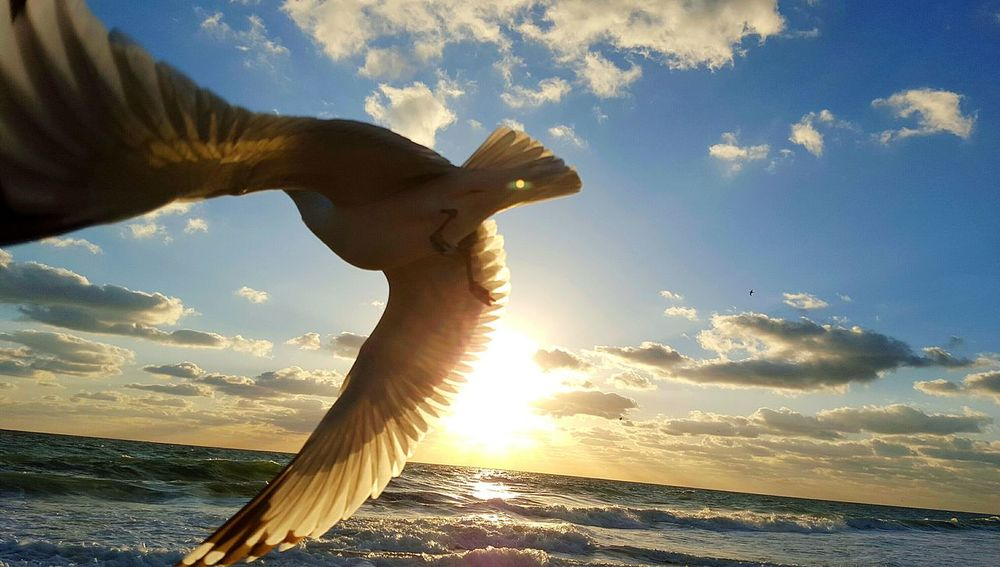 Hanging Out Relaxing Ocean Breeze Windy Day Ocean Seagull Seagulls And Sea Seagull Serenity Take Flight! Beach Life Waves, Ocean, Nature Beach Photography Gliding Bird Photography Soaring SEAGULL IN FLIGHT Oceanlife Romantic❤ Flying Bird Bikini Sand & Sea Birds Sunrise Soaring Birds Beach