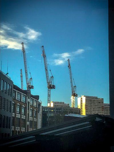 Crane -