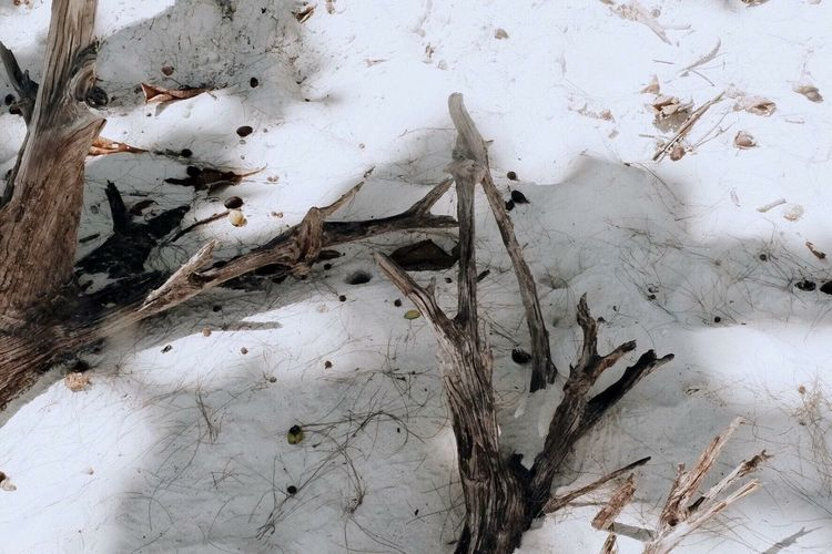 High angle view of dead plant on snow
