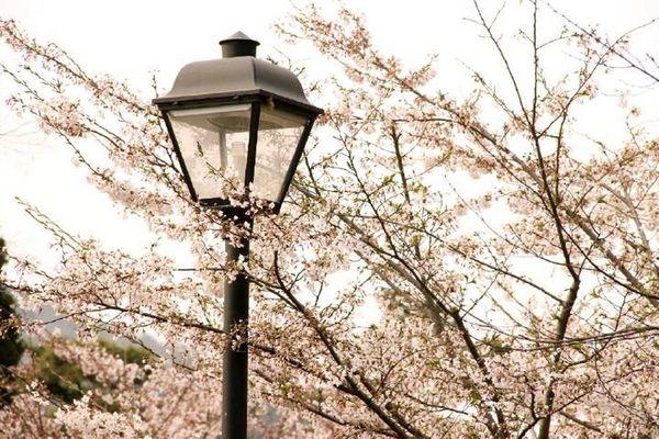 去年春天www Spring Plants