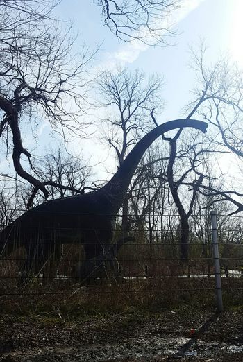 Dinos in the woods! Drove by a prehistoic park Tree No People Sky Outdoors Nature Tranquility Beauty In Nature Cloud - Sky Close-up Day Nature South Louisiana Dino Park DinosaursAroundTheWorld
