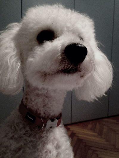 Cucciolo Curioso Ari Iloveyou