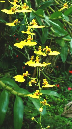 Plant Nature Green Color Yellow Outdoors Flower No People Growth Day Dancers Flowermagic Flowers 🌸🌸🌸 Flowers,Plants & Garden Beauty In Nature Grandmothersgarden Grandmas Garden Flowers Nature Close-up Nature Is Art Beauty In Nature Fragility Freshness