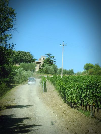 Italy 🇮🇹 Car Driving In The Dust Road To Winery Dusty Road Clear Sky Growth Wineyards Outdoors Agriculture Transportation Grapes 🍇 Winery Montepulciano Wine Moments Sunlight Toscana Landscape Winefields Landscape