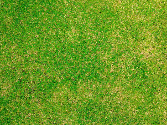 Green lawn for