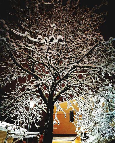 December Wintertime Winter Finland Beautiful Nature