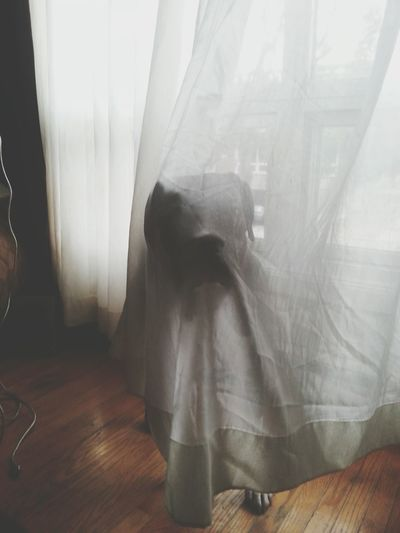 Ghost puppy, haha this is a daily occurrence Boxer Dogs Funny Love