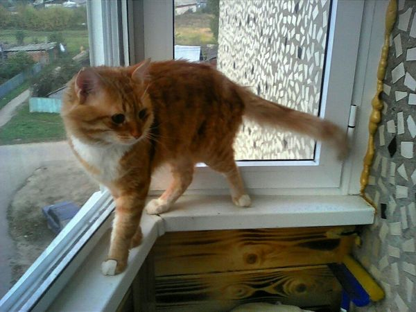 Тим Тимыч рыжий кот на балконе Relaxing Taking Photos Hi! Hello World My Cat My Pet Ginger Cat