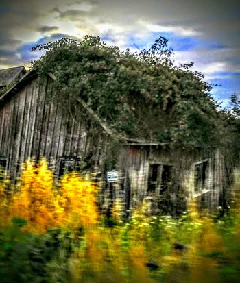 Hanging Out Taking Photos Check This Out Relaxing Reworked  God Bless America Love Of Photography Getty Images If These Walls Could Talk 43 Golden Moments Fine Art Photography Drive By Photography This View Beautiful On My Way Beautiful Nature Overgrown And Beautiful Barnhouse Barnstalker Barnology EyeEm Gallery Beauty Overgrown In The Country Old Barns Oregonexplored