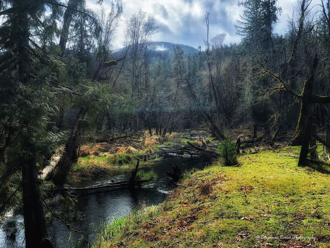 My back yard - Hall Creek in Randle Washington Outdoor Photography Flowing Water Tree Plant Nature No People Growth Sky Beauty In Nature Day Cloud - Sky Tranquility Land Sunlight Outdoors Tranquil Scene Forest Backgrounds Water