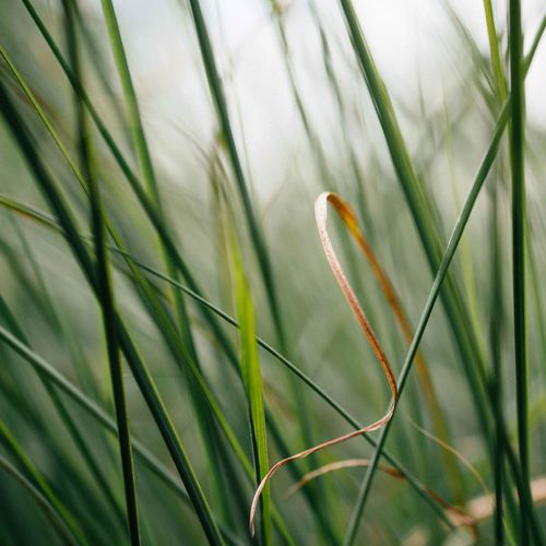 Close-up of green leaf on grass