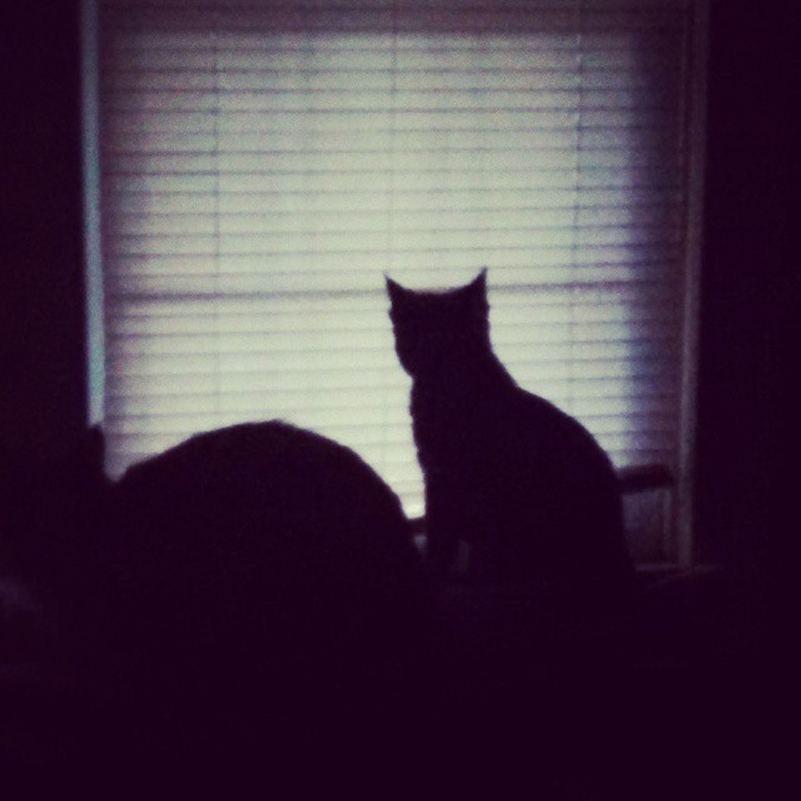 pets, domestic animals, domestic cat, indoors, cat, animal themes, mammal, one animal, feline, window, silhouette, home interior, sitting, relaxation, black color, dark, no people, whisker, glass - material, curtain