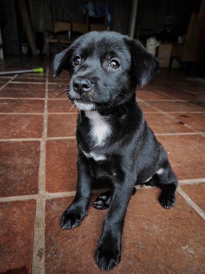 Portrait of black dog sitting on floor