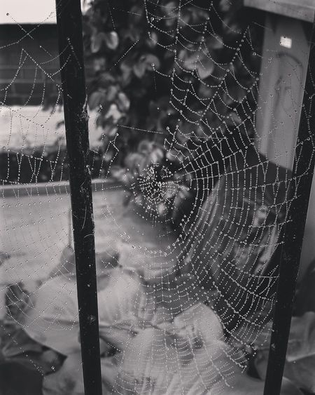 Frosty winter mornings ❄ Frost Spider Spidersweb Web Winter Morning Water Drops London Ealing First Eyeem Photo Pmg_lon