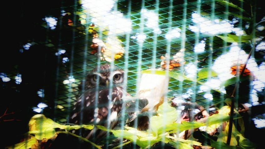 Zoo Animals  Achener Zoo Eye4photography  Kautz Fujifilm Finepix SL1000 Light And Shadow Eye Em Nature Lover Germany