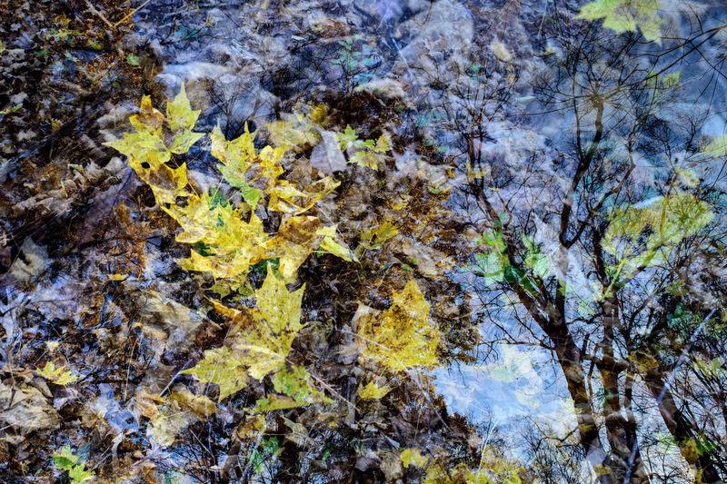 Full frame shot of autumn leaves on rock