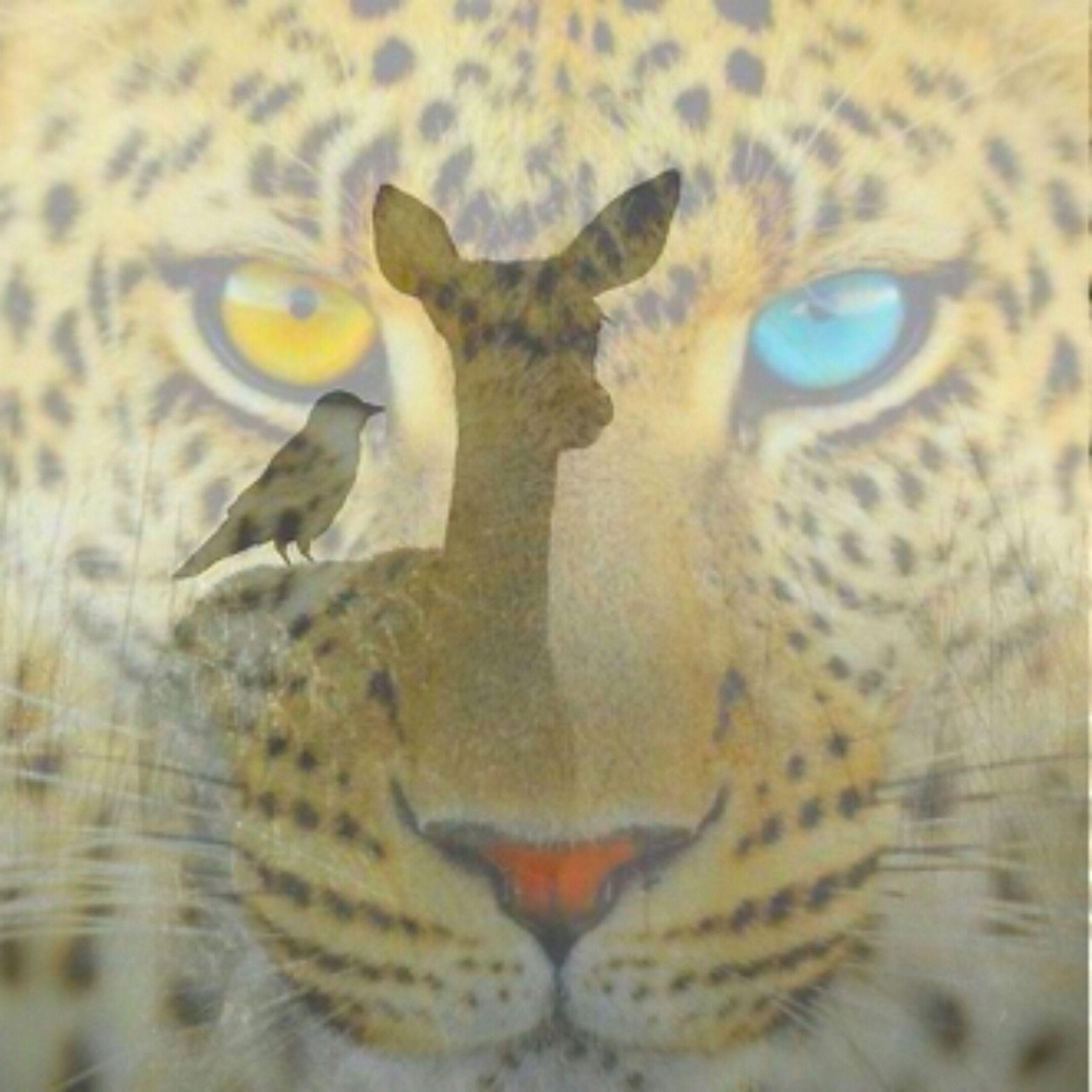 animal themes, one animal, animals in the wild, wildlife, animal head, bird, close-up, portrait, animal eye, looking at camera, animal body part, animal markings, no people, focus on foreground, nature, outdoors, zoology, vertebrate, beak