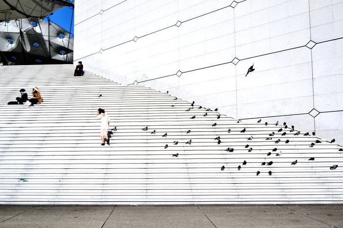 Again, La Grande Arche in Paris, I just love this building and its design! Architecture Minimalism Stairs Buildings Pigeons Open Edit Capital Cities  Capture The Moment Seeing The Sights Your Ticket To Europe