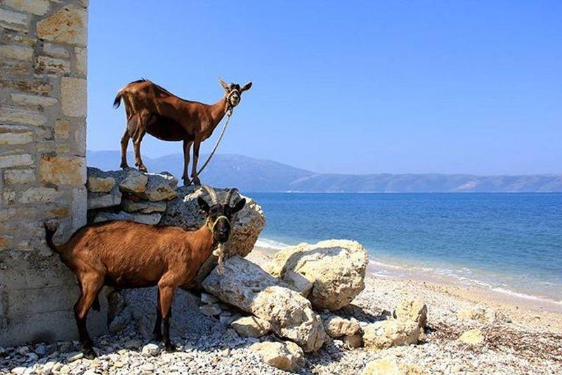 Radhime Karaburun Vlore Albania Shqiperia Detijon Mareionio Sea Dhi Dhia Capre Güre Two Is Better Than One