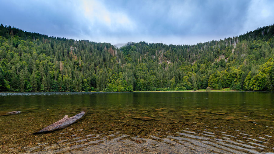 Der Feldsee im Schwarzwald Schwarzwald Beauty In Nature Black Forest Cloud - Sky Day Feldsee Forest Lake Nature No People Outdoors Scenics Sky Tranquility Tree Water