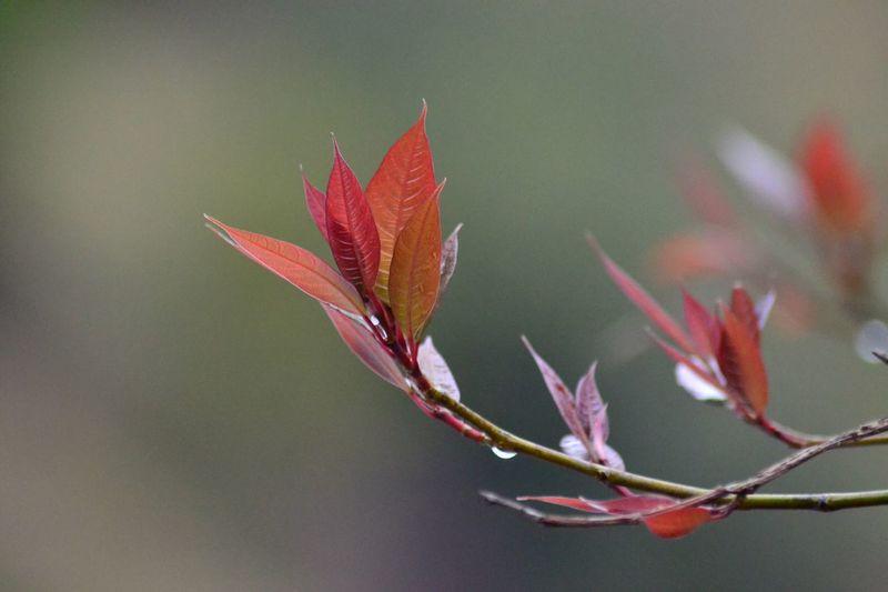 Plants Macro Close-up Close Up Petals Forest Greenry Wildplants RollingCamera EyeEm Best Shots