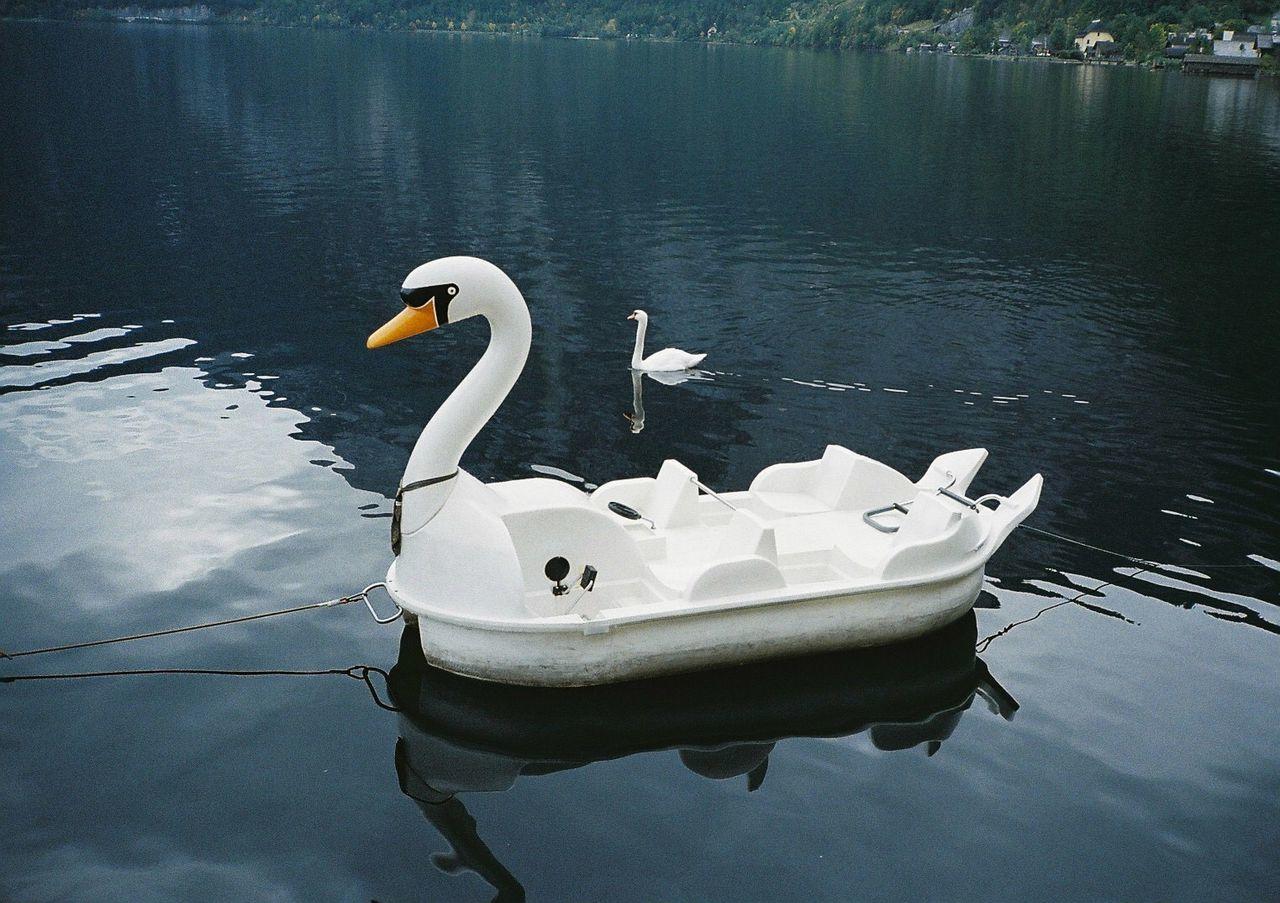 Swan pedal boat on lake