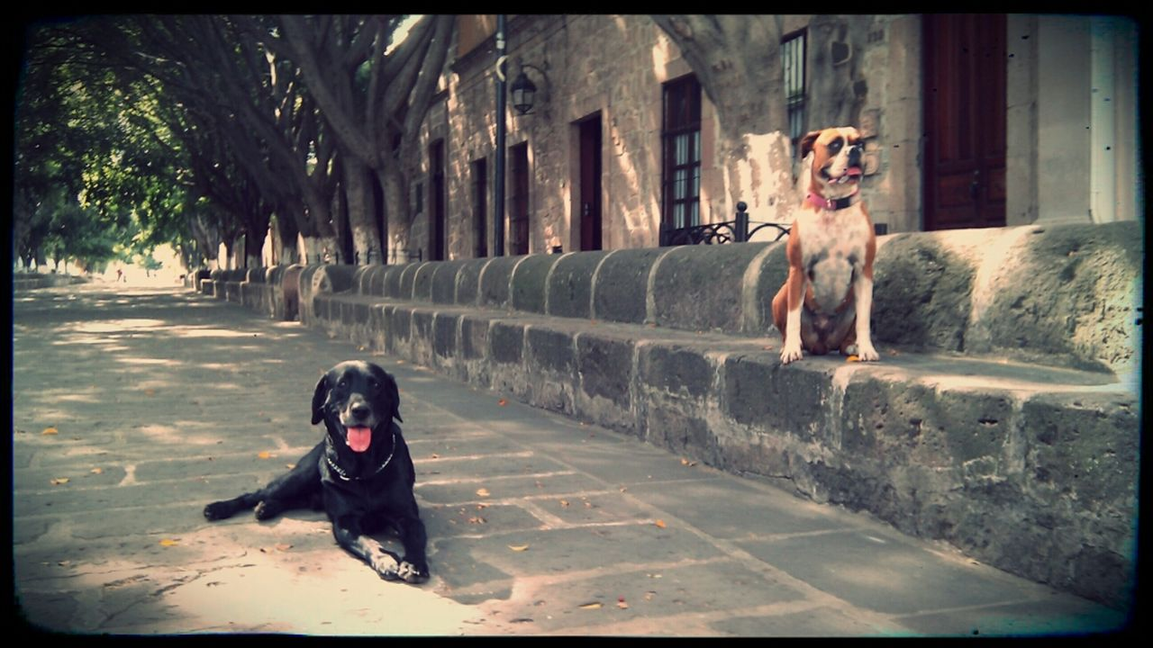 dog, pets, animal themes, domestic animals, one animal, mammal, sitting, outdoors, day, no people, tree, full length