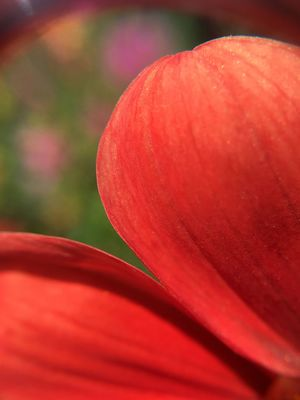 Flower Petals Macro Macro Photography Macro Beauty Macro Nature Red