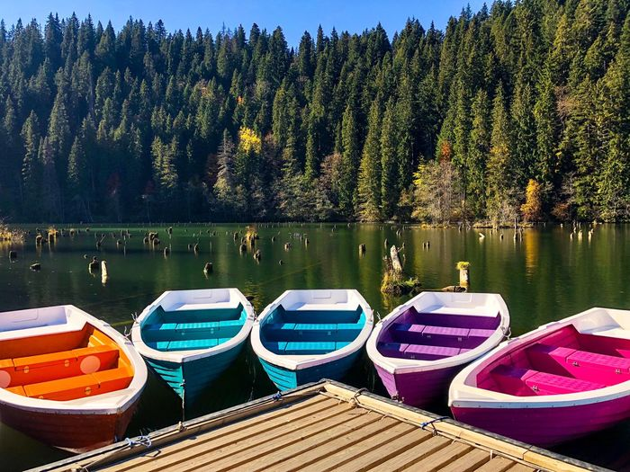 Colorful wooden boats with paddles on a lake surrounded by forest on a day with clear blue sky