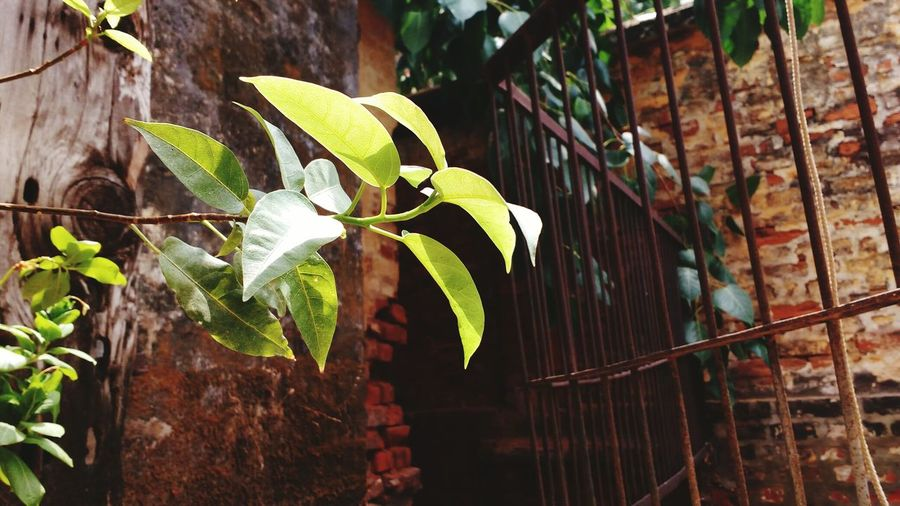 Leaf Growth
