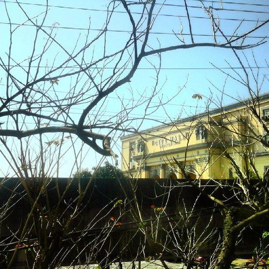 The Manila City Hall. Manila Cityhall Structures Trees Sunny Branch NCR