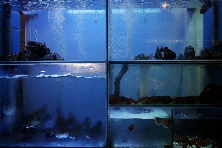 Animals Aquarium Blue Cage Food Nature No People Reflection Sea Water Window