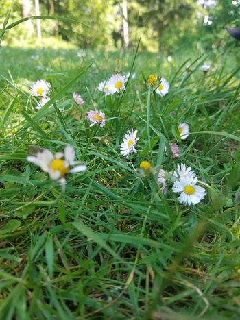 Flower Growth Nature Grass Fragility Field Beauty In Nature No People Petal Outdoors Day Plant Freshness Blooming Flower Head