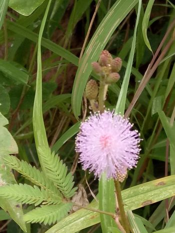 Flower Beauty In Nature Blossom Freshness Nature Purple Close-up Place Pauparapatt Dharmapuri TN India