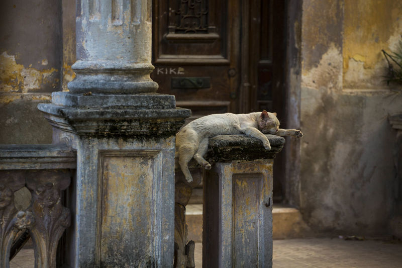 A cat takes a nap in Havana, Cuba. BestDestinatonSoFar Caribbean Life Abandoned Animal Themes Architecture Beauty Bestdestinations Close-up Damaged Day Mammal No People Old And Beautiful Old And Worn One Animal Outdoors Side View Weathered