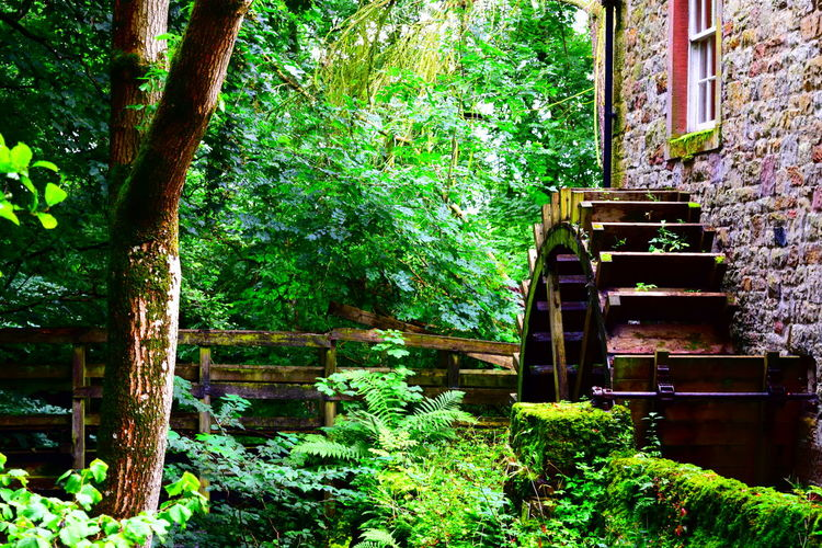 Built Structure Green Green Green Color Lake District Lake District Walk. Nature Old Building  Old Buildings Not Forgotten Old Mill  Old Mill Site Scenics Solitude Tranquil Scene Tranquility Tree Water Mill Water Mill Wheels WoodLand Water Wheel