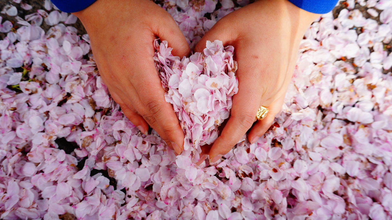 Cropped hand making heart shape with pink flowers