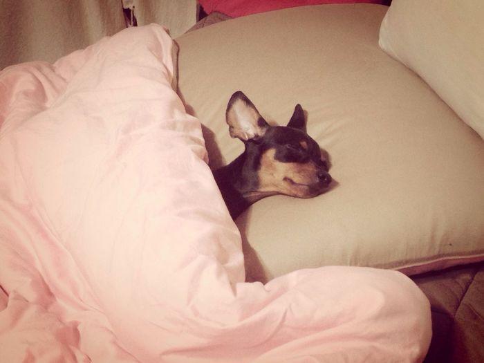 Good night! Kkossong I Love My Dog