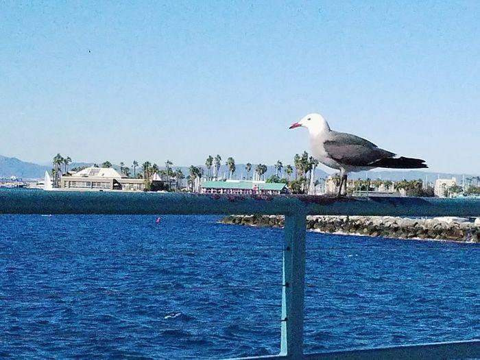 Seagull perching on beach against sky