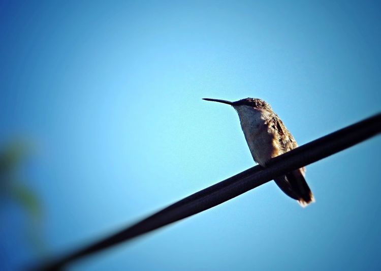 Goodnight all creatures, large and small Humming Bird Birds Bird Bird Photography Creative Canon Sx50 EyeEm Best Edits Popular Photos Nature Laid Back