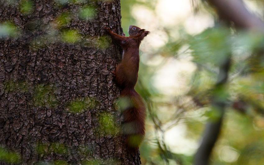 Monkey on tree trunk